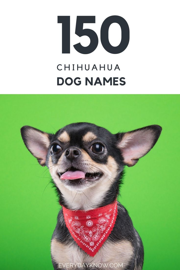 150 Chihuahua Dog Names Chihuahua Names Dog Names Chihuahua