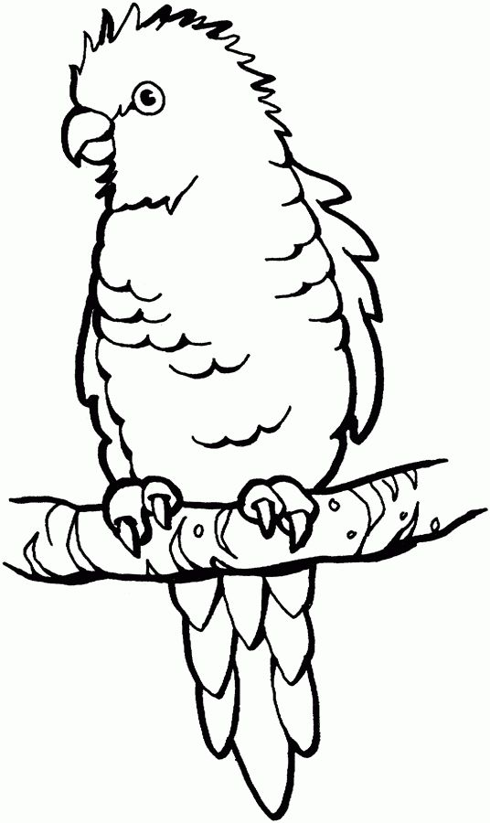 parrot bird free printable coloring pages
