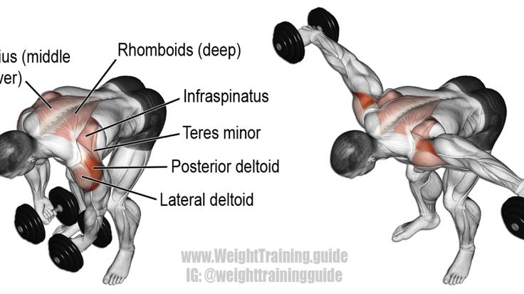 Dumbbell Bent Over Lateral Raise Exercise Ripp N Cloths