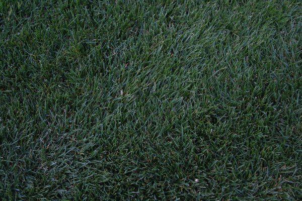Grass 001 by putrefy on DeviantArt
