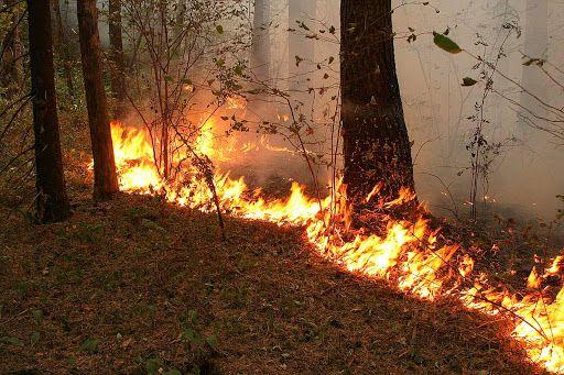 Лесной пожар около 1-го карьера