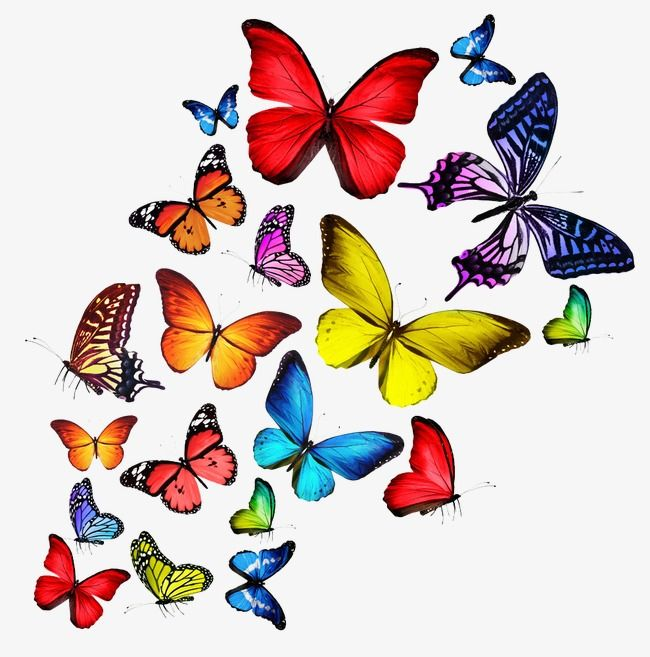 Butterfly colorful. In sckrapbooking clip art