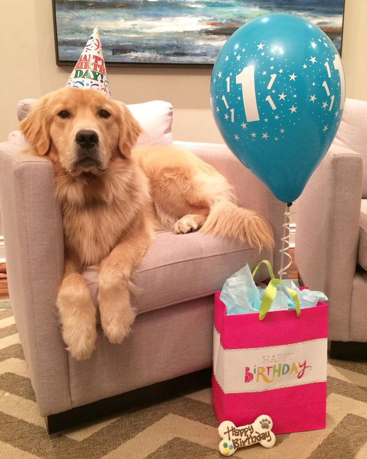 Dougie's first year has been filled with mischief, toys, and lots of love. Happy first Birthday, Dougie!!!
