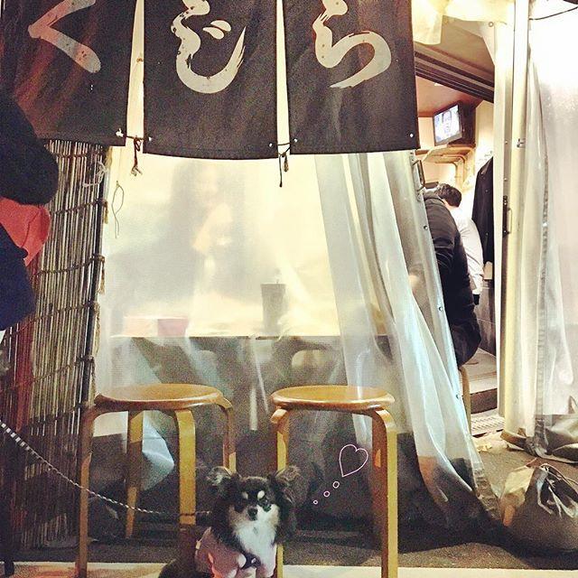 Japanese ODEN ☺︎💛 . でんでんおでん🍢 . 中之島のパタゴニアアウトレットから、テコテコ歩いて🐾🐶👩🏽👨🏽 . . 花くじら 🍢✨ . 生麩、ネギ袋(いつもネギ爆弾って言ってしまう)、しゅんぎく、大根、たこ  これは確実にたのむやつ☺︎💗 . . 外側のお席が空くのを待って、なんとかケンちゃんと行けました٩( 'ω' )و しばらく看板犬になってました😂 . . 🌴http://chirodoglife.com🌴 . #CHIROdoglife #happydogs#lovedogs#chihuahua#handmade#dogstagram#doglovers#chihuahualove#todayswanko#bestphotogram_dogs #japan #犬#愛犬#ワンコおしゃれの会 #わんこなしでは生きていけません会#愛犬との暮らし#ハンドメイド犬服#犬服#チワワ#ドッグウェア#ふわもこ部#ブラックタン#犬服オーダー#今日のワンコ#おでん#チワワ画像#親バカ部#小さな命を守る会#殺処分ゼロ