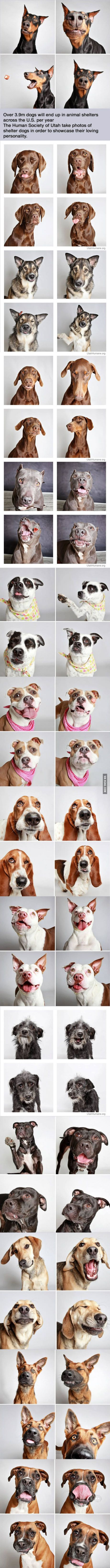 Shelter puts rescue dogs in photo booth to get them adopted