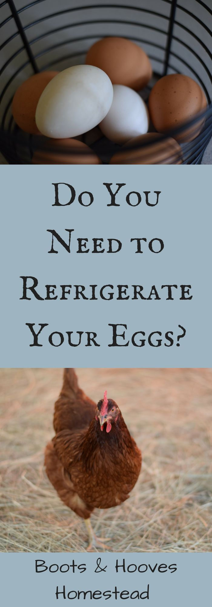 Do you need to refrigerate your eggs? The short answer is sometimes yes and sometimes no. I'll explain why you do and don't need to refrigerate your eggs.