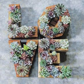 Happy Valentines Day!! pic: @succulentcity #thesucculentsource #succulents #succulent