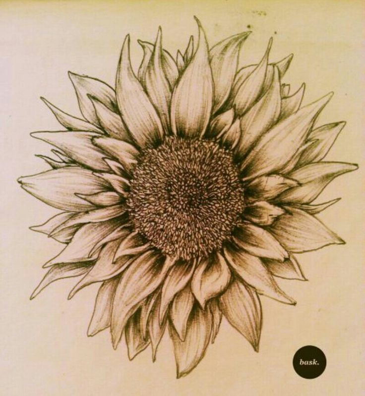 I honestly really love the look of this sunflower.