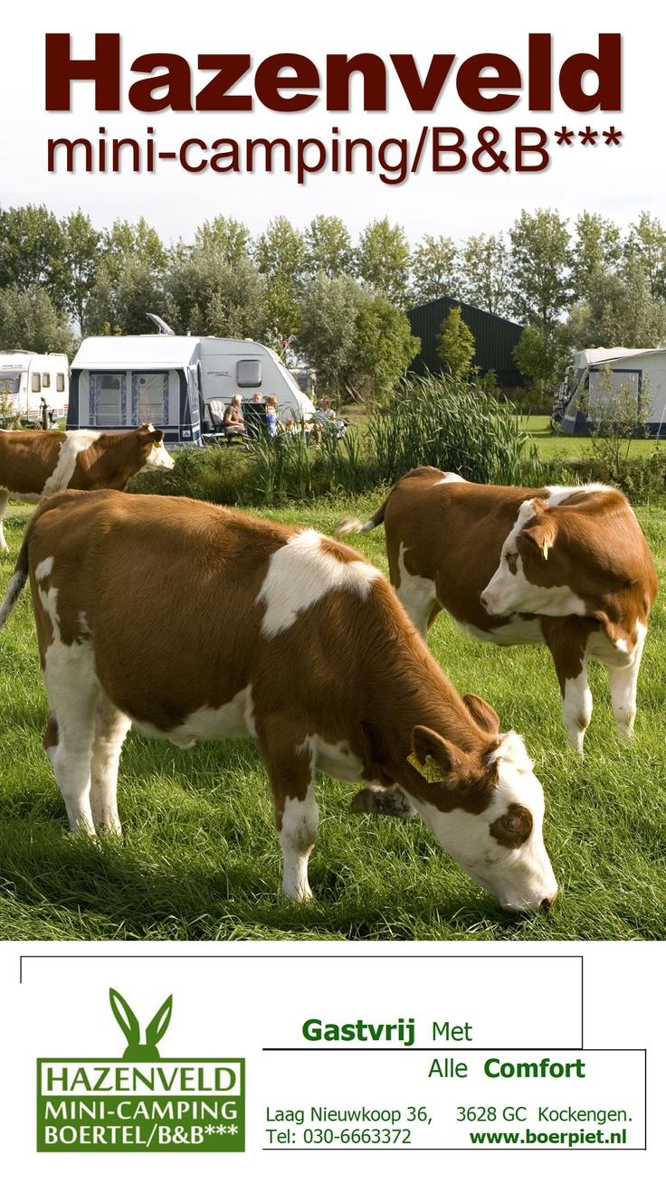 Hazenveld  mini-camping/B***  Boerpiet.nl