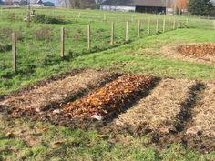POTAGER SANS TRAVAIL DU SOL - intérêts : l'écosystème du sol reste préservé et la préparation est moins fastidieuse. Créer un potager directement sur un terrain dégagé. Il sera mis en œuvre en début d'automne afin que les éléments mis en place se soient transformés en humus au printemps suivant. Le principe est basé sur la mise en place d'une couche de paillage, d'au moins 40 cm posé à même le sol, bien équilibré pour se décomposer facilement.