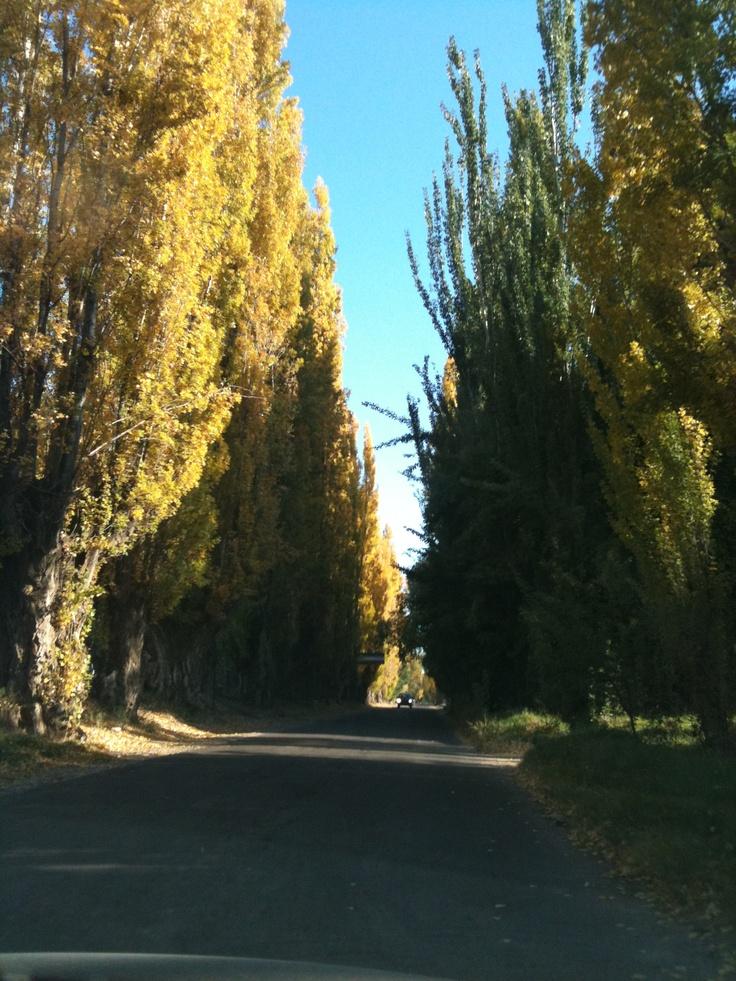 Autumn in mendoza #argentina