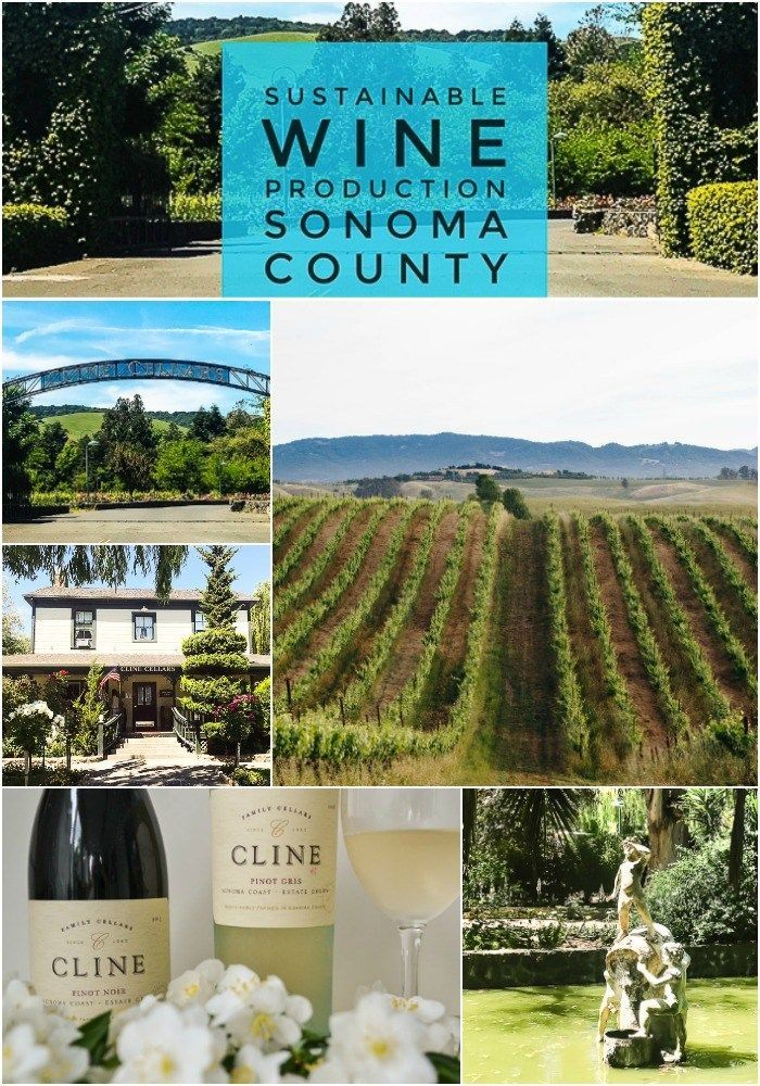 Wine tasting | California | Sonoma County | organic Sustainable | Cline Cellars