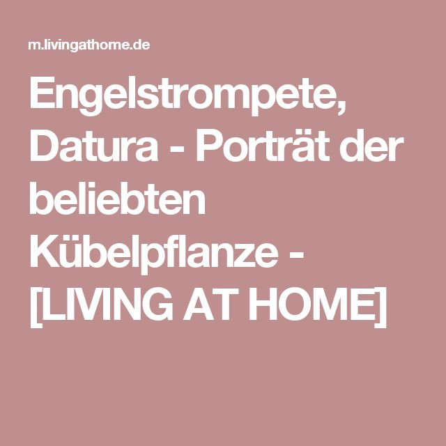 Engelstrompete, Datura - Porträt der beliebten Kübelpflanze - [LIVING AT HOME]