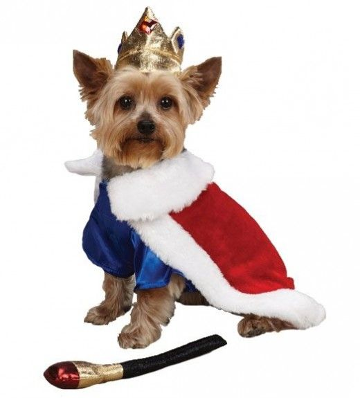 top 10 small dog costumes   Top 10 Halloween Costumes for Dogs 2013