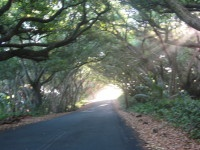 Red Road, near Kalapana, love this place, and I took the pic