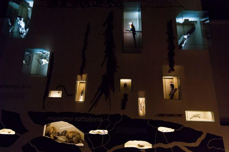 Le Strategie di vita, Museo Storia Naturale, Venezia