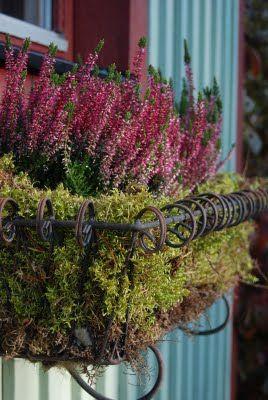 Höstig balkonglåda