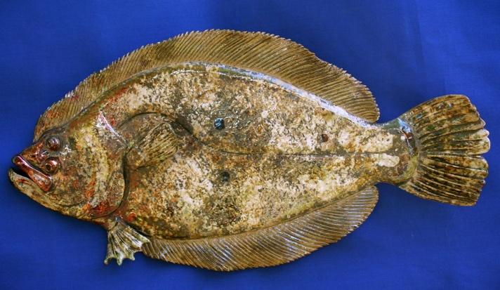 Raku fish Flounder