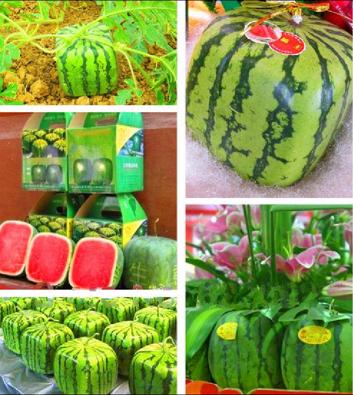 17 best ideas about square watermelon on pinterest how - Square watermelons how and why ...