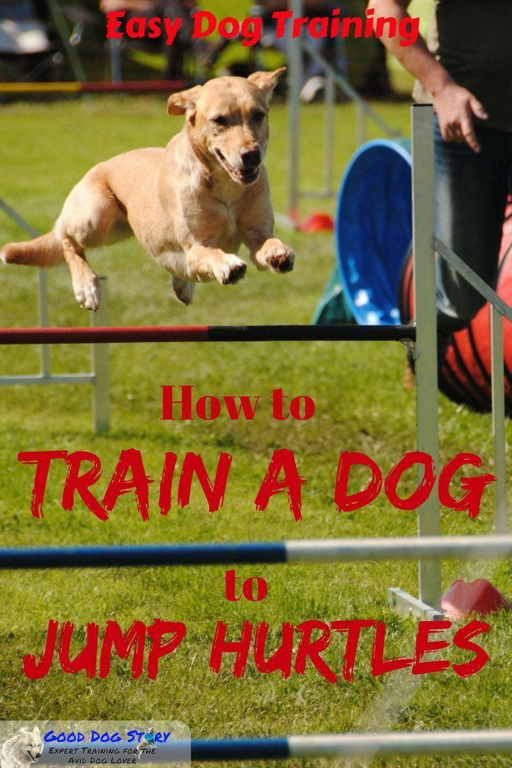 Teaching Dog Hurtles How To Train Your Dog To Jump Hurtles The
