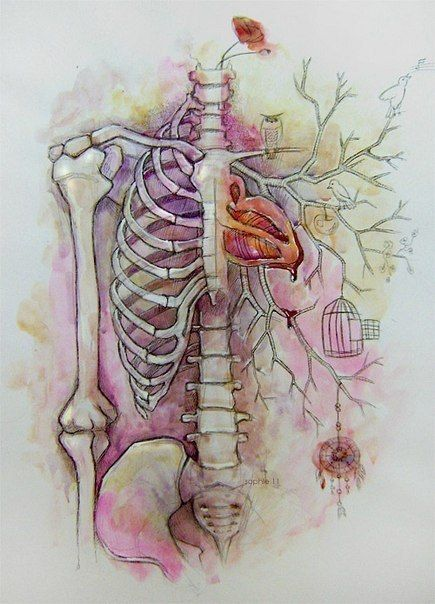 #skull #art #painting #illustration #anatomy #skeleton
