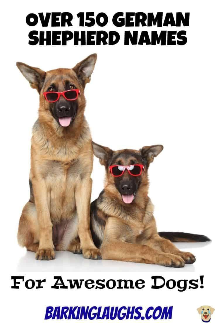 The Best Dog Names For German Shepherds Dog Names Best Dog