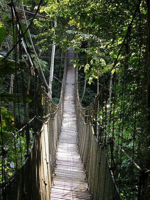 Amazon Rainforest. I've always wanted to walk across a sketchy bridge ;D