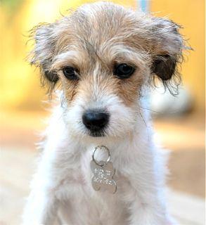 Fluffy Dog Rescue Houston