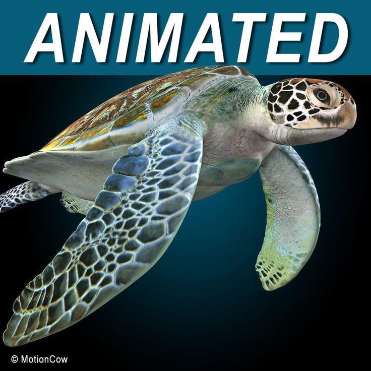 realistic turtle c4d