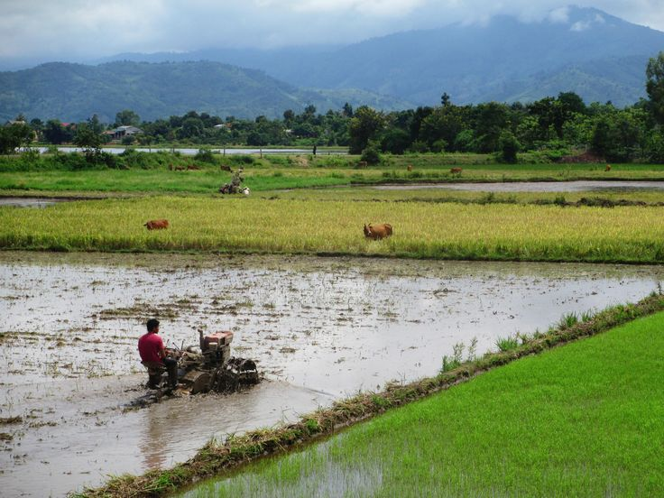 A Vietnamese farmer working the soil under a flooded rice patty. Photo taken between Dalat and Buon Ma Thuot. #travel #photography #nature #photo #vacation #photooftheday #adventure #landscape