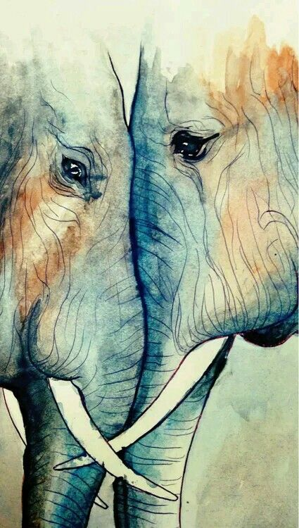 Elephant love is to strong to be broken ... it is, till the end