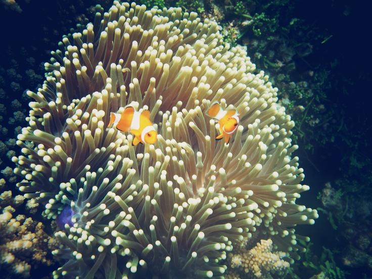 Peek a boo - Pulau kecil, karimun jawa, indonesia