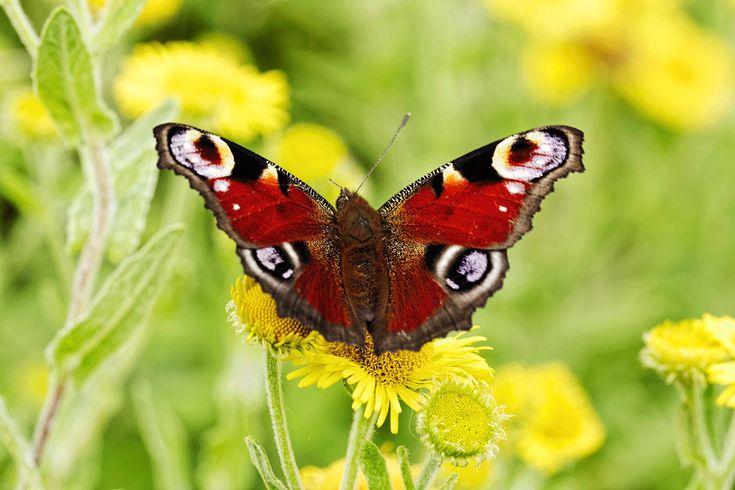 Schmetterlingshaus –  Bauanleitung
