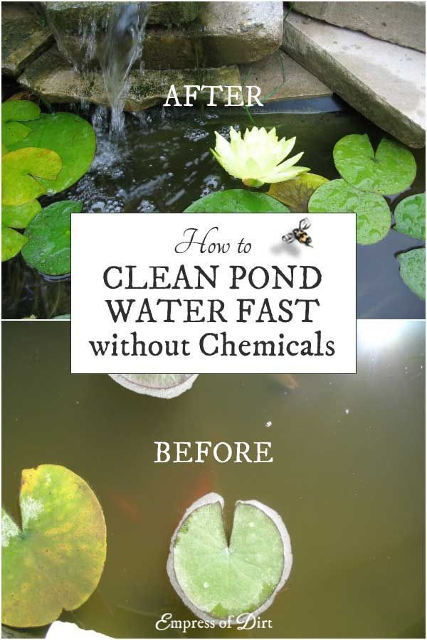 Is your pond water murky you need this trick garden for Koi pond water murky