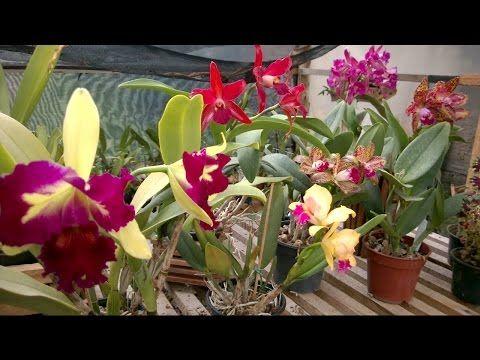 VARIEDADES  CROCHÊ- ARTES: Como Super Florir Orquídeas (VEJA com ATENÇÂO)