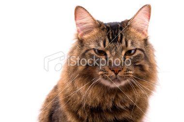 Mostly Cloudy Night - pumpkin cat