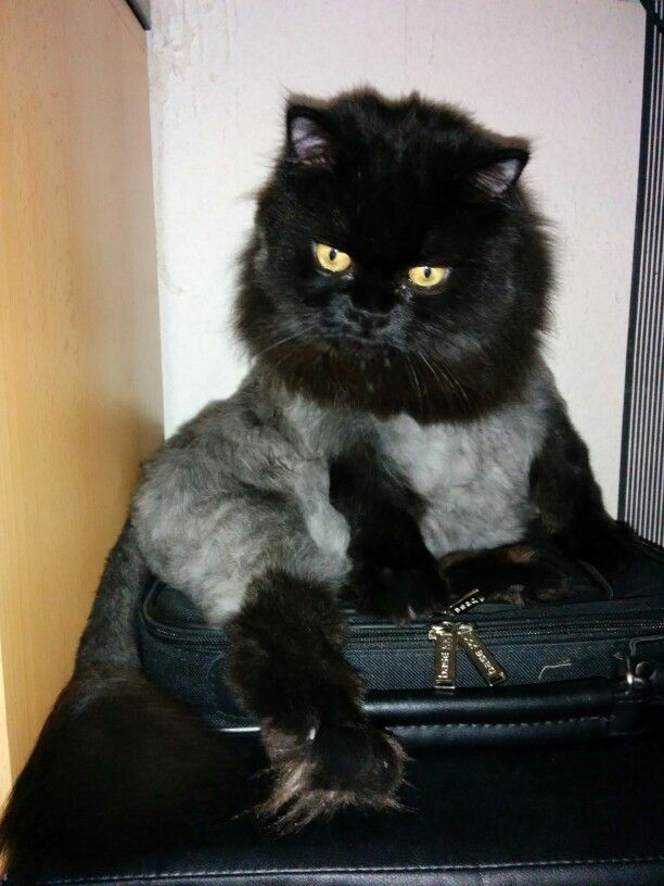 My little cat :)