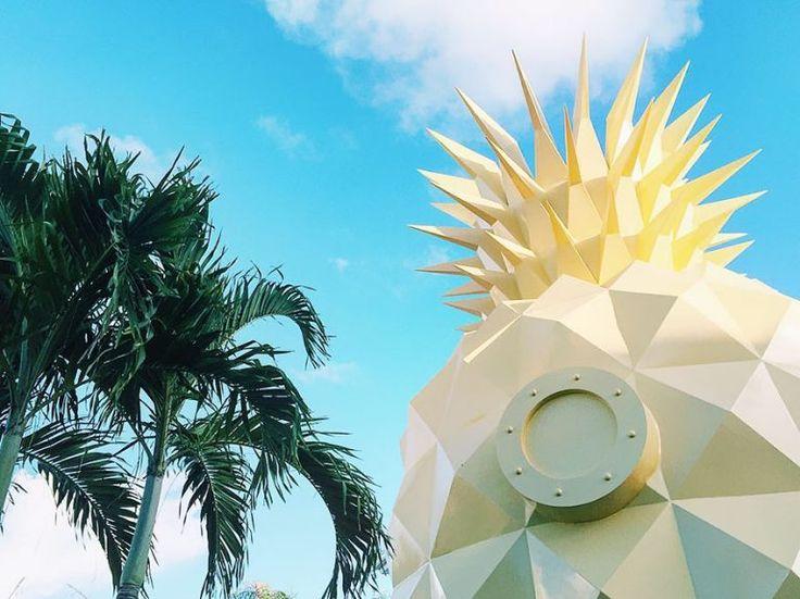 une-maison-ananas-de-bob-l-eponge-a-louer-9 une maison ananas de bob l'éponge à louer