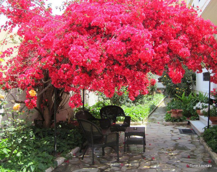 Cato Stalos.Agia Marina.Crete. Greece. TONE LEPSOES PICTURES.