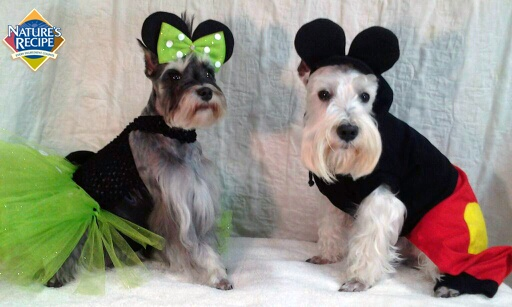 Zack and Zoey's are the perfect pup pair in their matching costumes. #miniatureSchnauzer #dog #halloween #costume #pet     ipawz.com