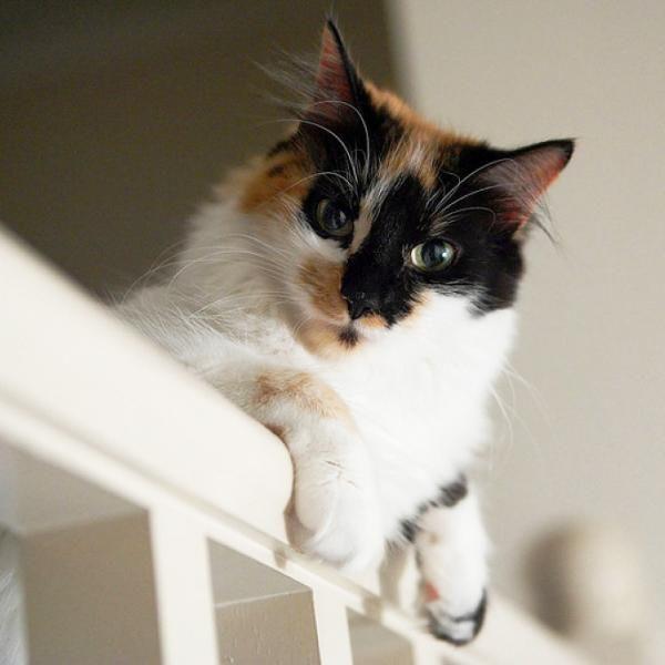 quitar el olor a pis de gato ¿Tu gato ha hecho pis fuera de su caja