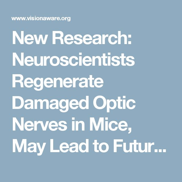 New Research: Neuroscientists Regenerate Damaged Optic Nerves in Mice, May Lead to Future Treatment for Glaucoma or Other Optic Nerve Disorders - VisionAware Blog - VisionAware