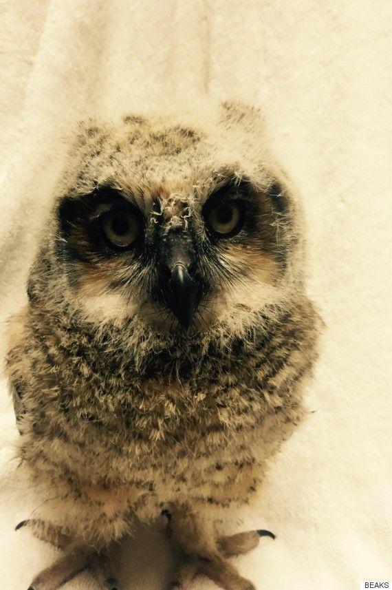 Baby owl  Pinned by www.myowlbarn.com