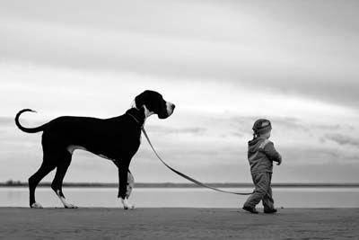 Выбор поводка: как правильно выбрать поводок- портал для владельцев домашних животных PetCare.ua