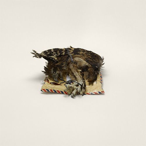 Image credit: Taryn Simon. Bird corpse, labeled as home décor, Indonesia to Miami, Florida (prohibited)