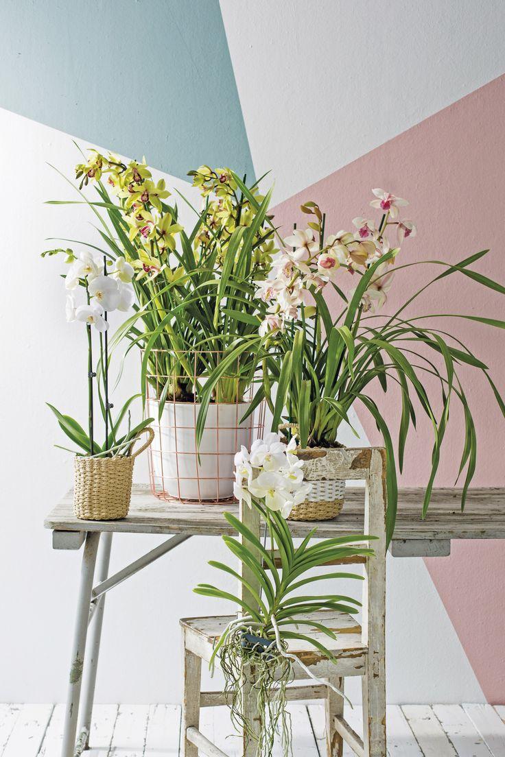 Orchideeën tegen een grafische muur met pastelkleuren