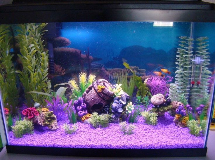 Best 25+ 20 gallon aquarium ideas on Pinterest | Fish tank ... 10 Gallon Fish Tank Ideas