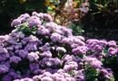 Low Profile & Shade Loving Flowering Bushes   Home Guides   SF Gate
