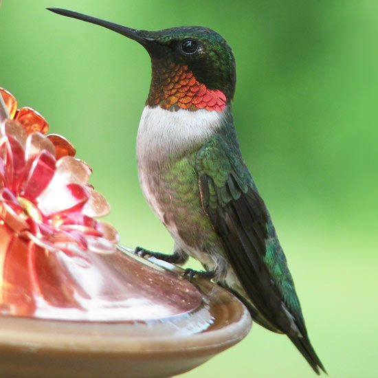 Attract beautiful hummingbirds to your yard year after year with our tips. We're sharing the best garden plants to attract hummingbirds, the best feeders and sugar water recipe, and a guide to understanding hummingbird habits. #hummingbirds #birds #garden