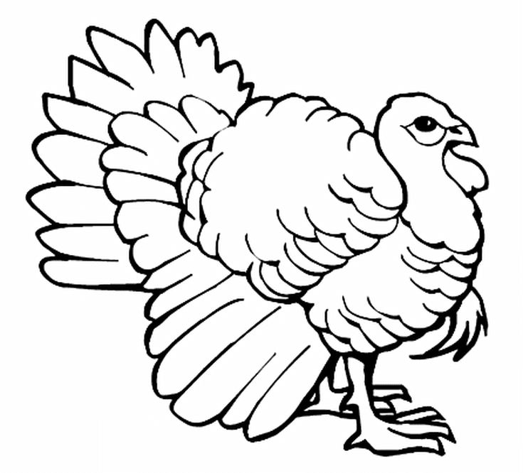 Best Turkey Images On   Coloring Pages Turkey